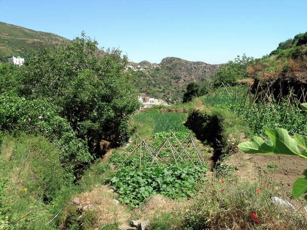 Gemüsegärten bei Koronos