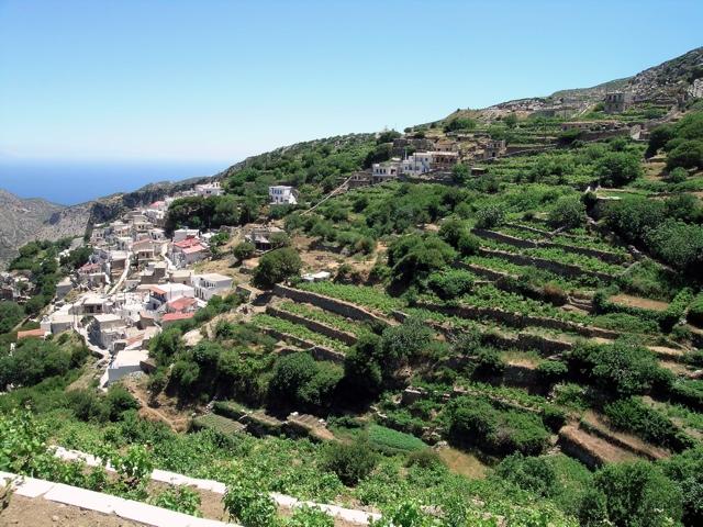 Weinterrassen in Koronos