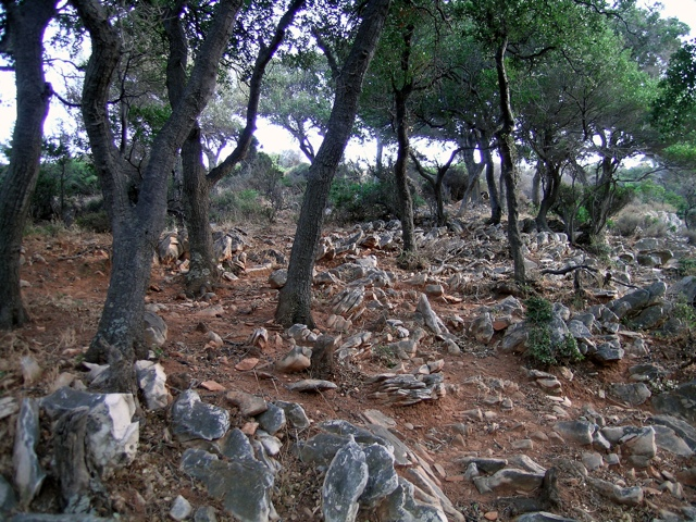 Kermeseichenwald auf Marmorgestein