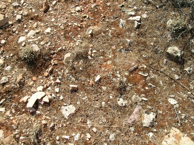 Boden über Marmor mit Flechten und Moosen