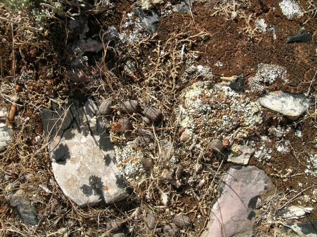 schützende Flechten- und Moosschicht auf Boden über Marmor