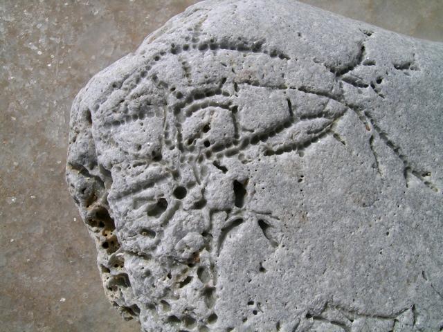 Stein mit Löchern vom Bohrschwamm