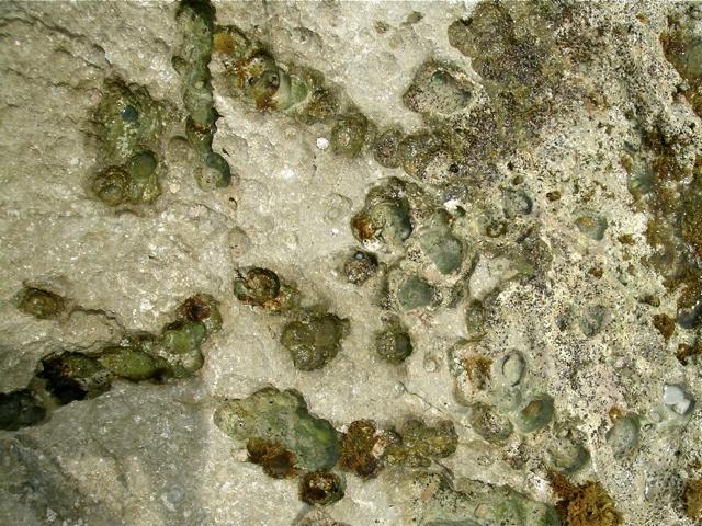 durch endolithische Blaualgen entstehende Löcher im Marmorfels im Supralitoral