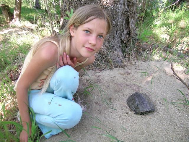 Kaspische Wasserschildkröte