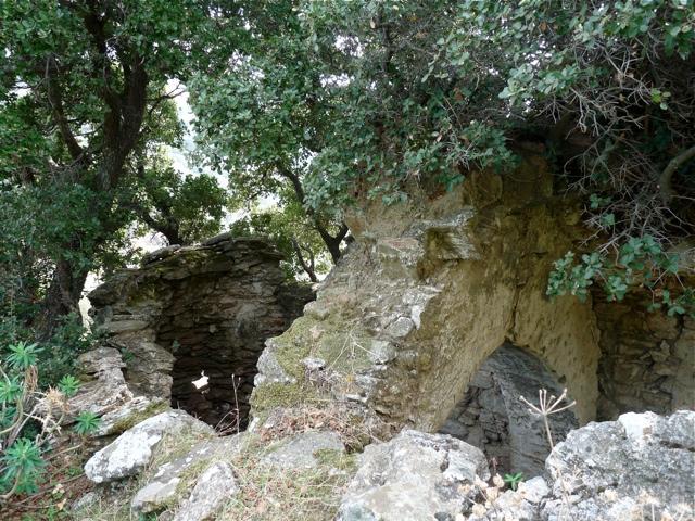 Eine Baum-Kirche in der Tragaia
